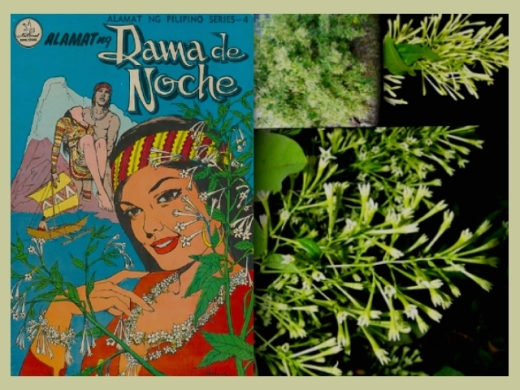 ARTICLES - Dama De Noche 1